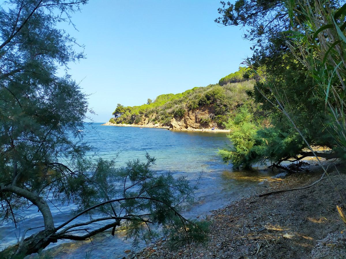 spiaggia con alberi che arrivano in mare