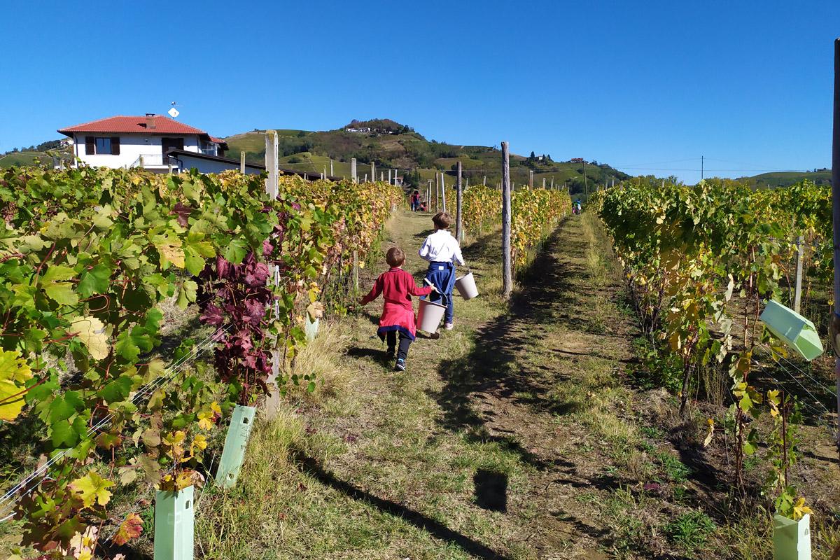bimbi che corrono con secchio nel vitigno