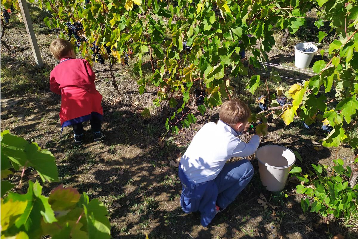 bimbi intenti a cogliere l'uva