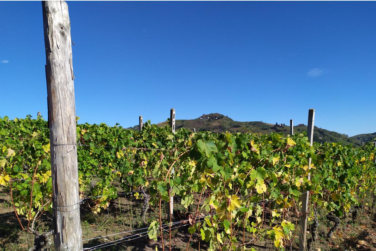 vitigno con panorama sullo sfondo