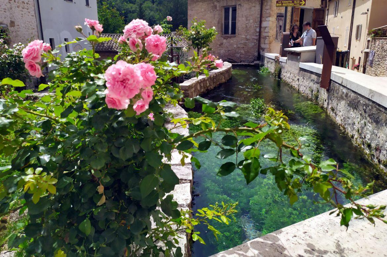 Fiori in primo piano e sullo sfondo un canale con acqua che scorre nel paese